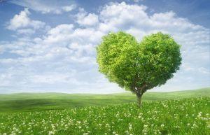 albero-solitario,-cuore,-prato-verde-215430